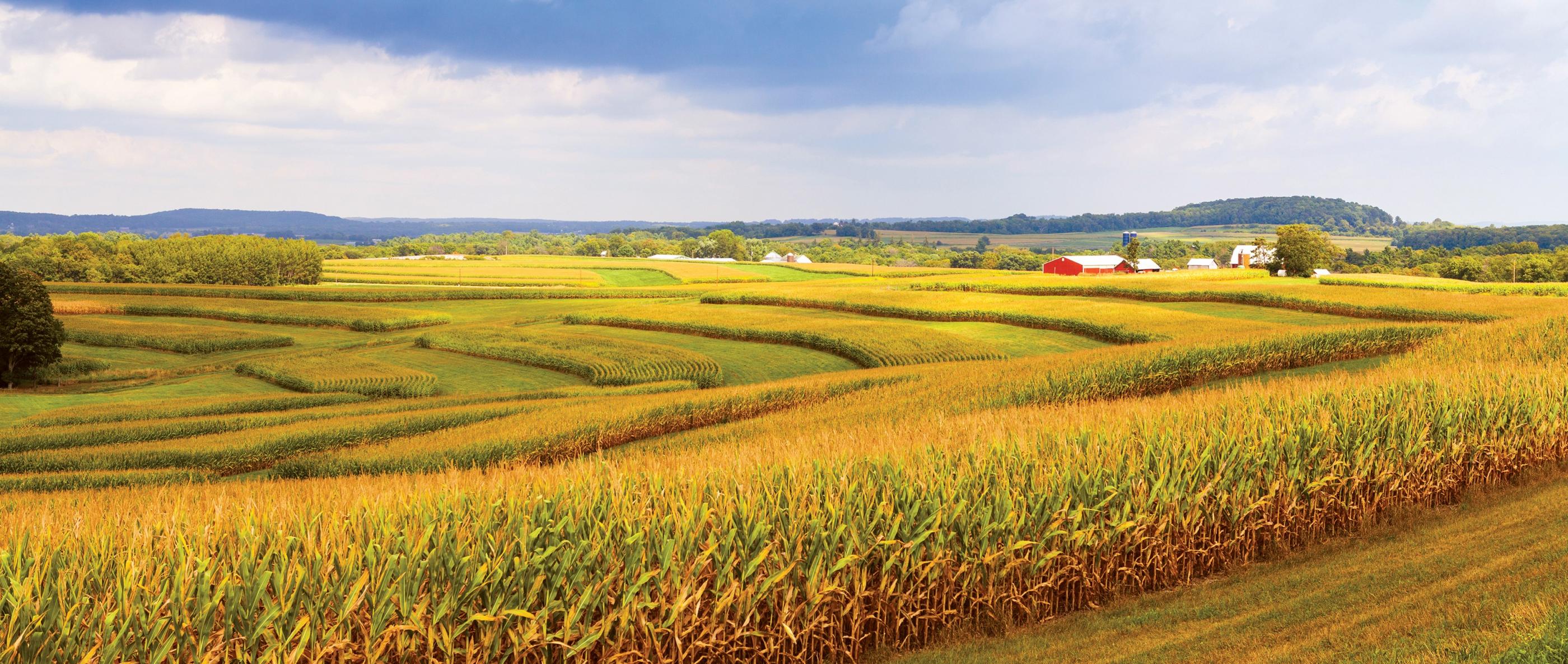 mAgma Farmland